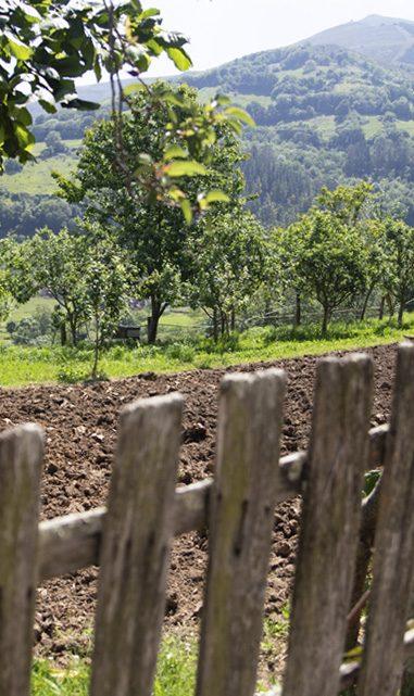 Huerto con valla en la naturaleza