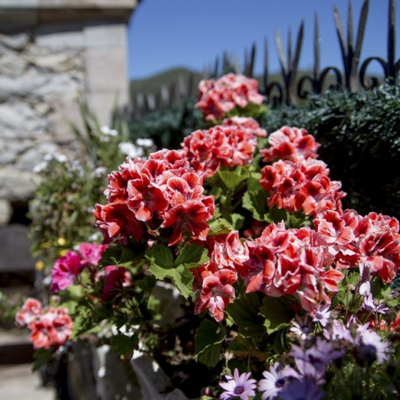 Detalle de flores en el exterior